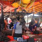 Bats hanging in Indonesian Market
